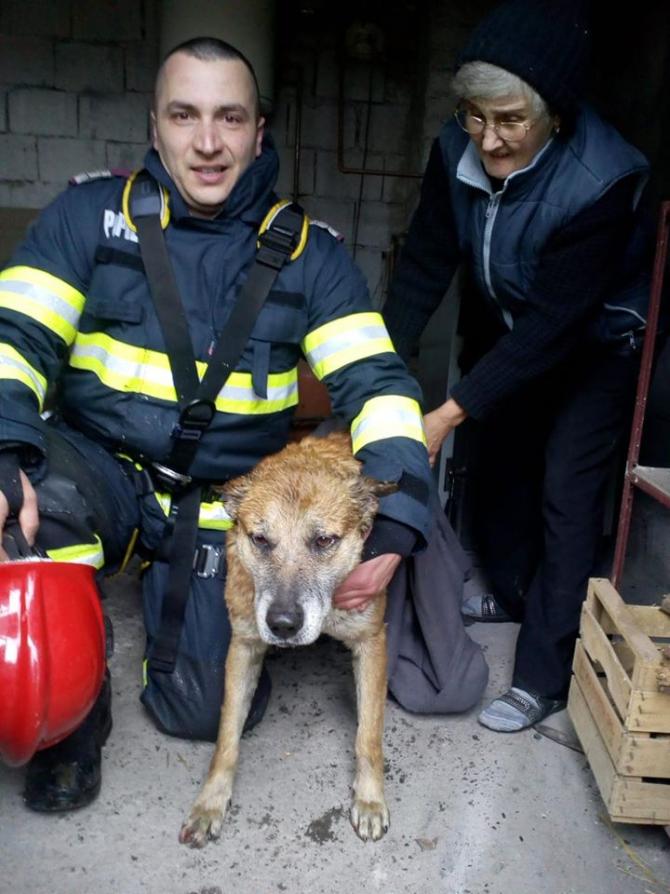 Câine salvat de pompieri. Foto: Facebook / ISU Timiș