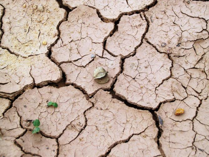 Plantele pot rezista la secetă prin gimnastica genetică