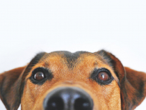 Câine / foto ilustrativ