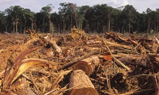 Amazonia este un uriaş rezervor de virusuri