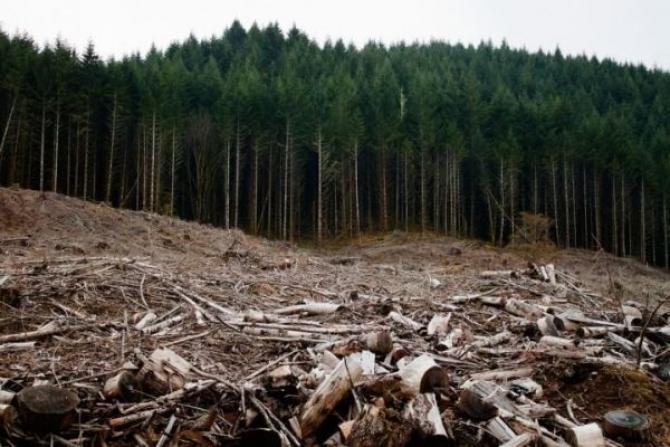 Dan Barna: DNA-ul pădurilor va avea la dispoziție procurori specializați