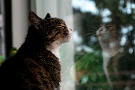 Miau! Astăzi este Ziua Internațională a Pisicii ... |Ziua Internațională A Pisicii