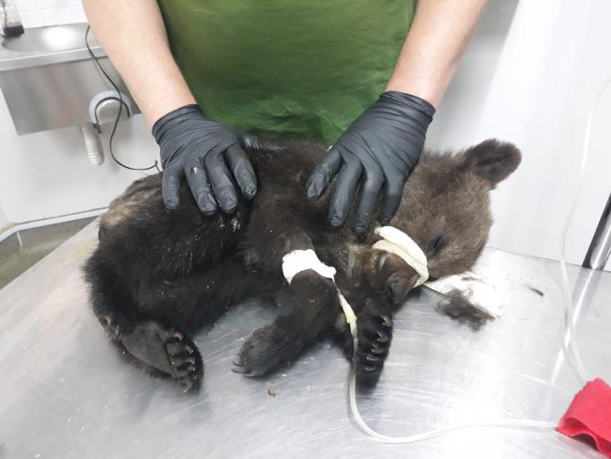 Foto: Facebook / AMP Libearty - Bear Sanctuary