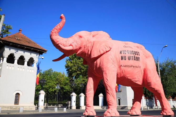 3. -imagine fara descriere- (elefant-roz-2_42149700.jpeg)