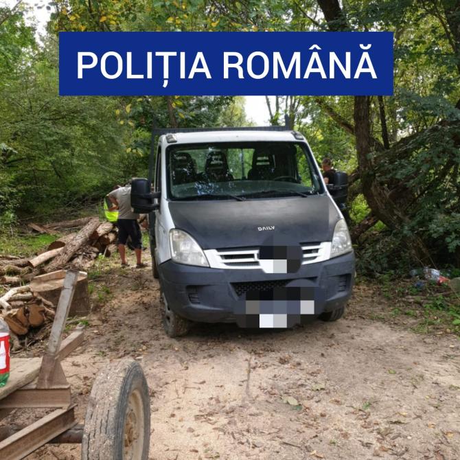 Tăieri ilegale de lemne. Foto: Poliția Română