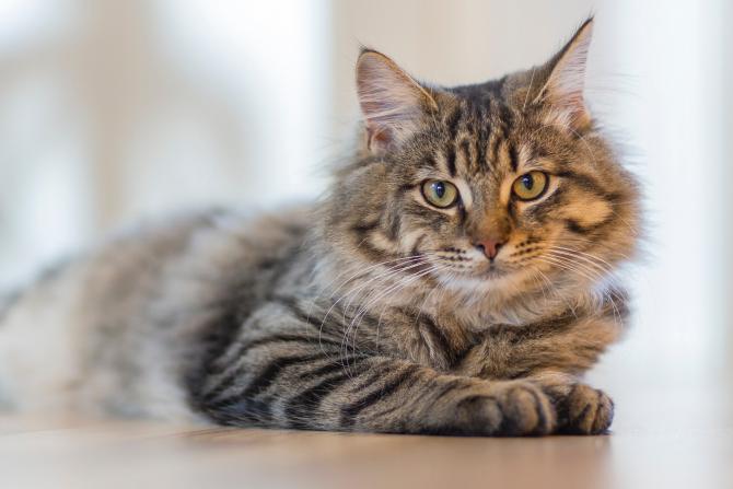 Pisică / Fotografie creată de Inge Wallumrød, de la Pexels