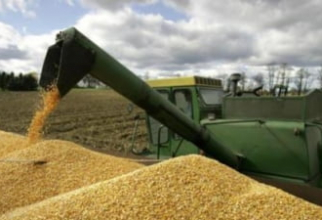 Prețul grâului a explodat