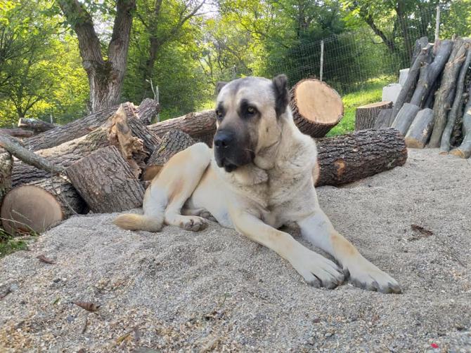 Italia a început un studiu cu câini pentru detectarea Covid-19 prin miros - fotografie cu rol ilustrativ arhivă DC News