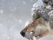 ANM, alertă METEO de COD GALBEN de ninsori. Informare de vreme rea în toată țara