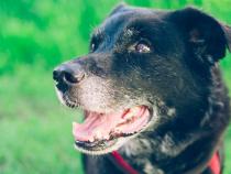70 de câini morți după ce au mâncat produsele Midwestern Pet Foods. Foto: Original_Frank pe Pixabay