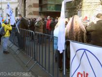 Cartel Afla, proteste de amploare în Bucureşti.