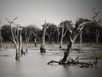 Gardienii Potopului, o sectă care a început să facă prozeliți după eșecul unei profeții apocaliptice