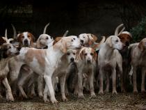 Marius Marinescu face apel pentru salvarea mai multor câini. Sursa: Pixabay