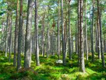 Copacii nu trebuie plantați oriunde și în orice condiții