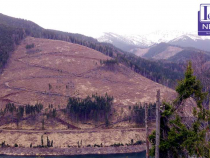 'Tăiaţi pensiile speciale, nu pădurile'. Declic organizează un PROTEST pe schiuri în Poiana Braşov