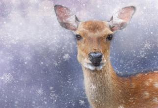 ciute cerb padure inghetata romsilva sursa foto: Pixbay