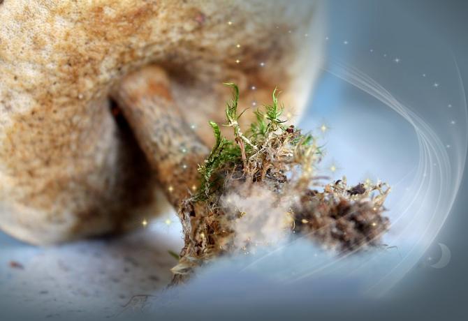 Unui bărbat i-au crescut ciuperci halucinogene în sânge / Imagine de Ирина Кудрявцева de la Pixabay