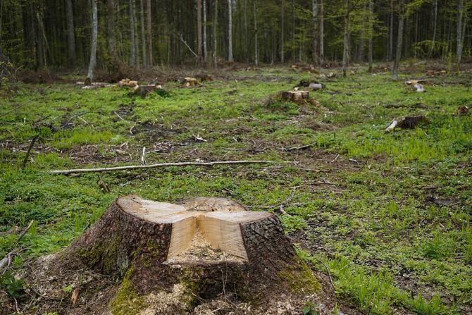 Trei bărbați sunt suspectați că au tăiat arbori de pe un teren privat / Imagine de summa de la Pixabay