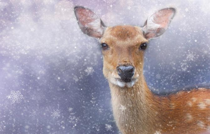 caprioare cerb padure romsilva apuseni sursa foto: Pixbay