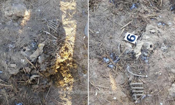 Deşeuri animale descoperite îngropate pe un teren viran în judeţul Tulcea. Foto: Poliția de Frontieră