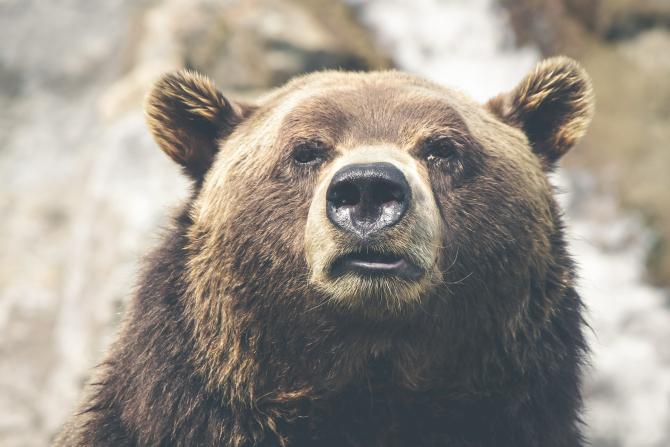 Urs filmat când intra într-o gospodărie din Bușteni.