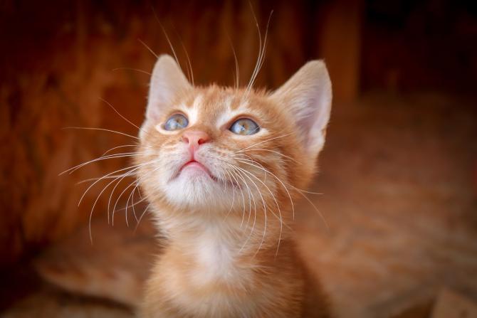 Pisică filmată când îndepărtează un copil de balustrada unui balcon / Imagine de birgl de la Pixabay