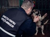 Poliția Animalelor Foto Facebook Poliția Română