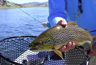 Peștii de apă dulce sunt în pericol, spun grupurile de conservare a naturii. Foto: Pixabay