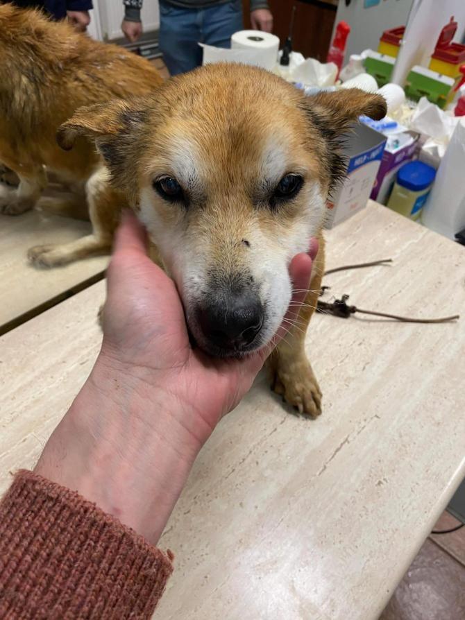Câinele abandonat în Botoșani. foto Facebook
