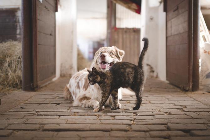 Coreea de Sud va testa câinii și pisicile pentru noul coronavirus / Imagine de Václav Závada de la Pixabay