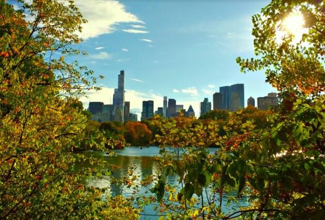Incidentul a avut loc în Central Park, NY. Foto: JodesJ via Pixabay