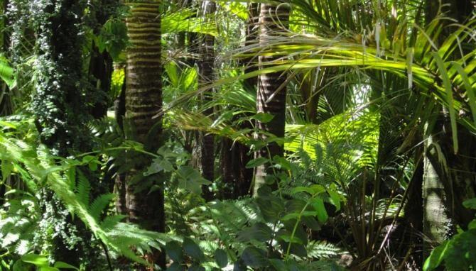 Pădurea Amazoniană, vândută ilegal pe Facebook