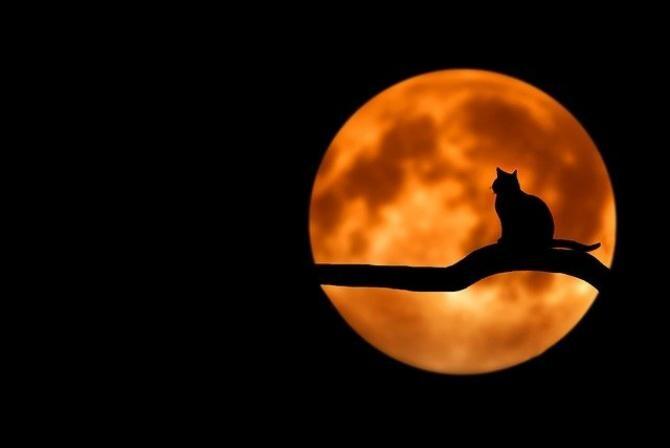 Horoscop, vineri, 26 februarie 2021. Sursă foto: Pixabay