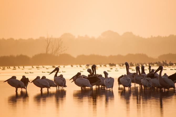 Wild Danube, următorul proiect al lui Charlie Ottley. Parteneriat cu Asociația Delta Dunării  /  Sursă foto: Pixbay