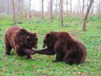 """Doi urși au încercat să se """"cazeze"""" într-o pensiune din Sinaia   /   Foto cu caracter ilustrativ: Pixabay"""