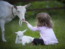Imagini virale. O fetiță din Italia face lecții online în munți, printre capre  /  Foto cu caracter ilustrativ: Pixabay