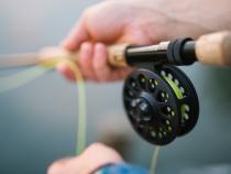 Pescuitul, interzis până în iunie pentru anumiți pești. Ce specii au intrat în prohibiție  /  Foto cu caracter ilustrativ: Pixabay