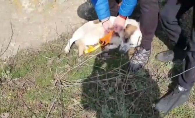 Captură Video: Yotube Vrn