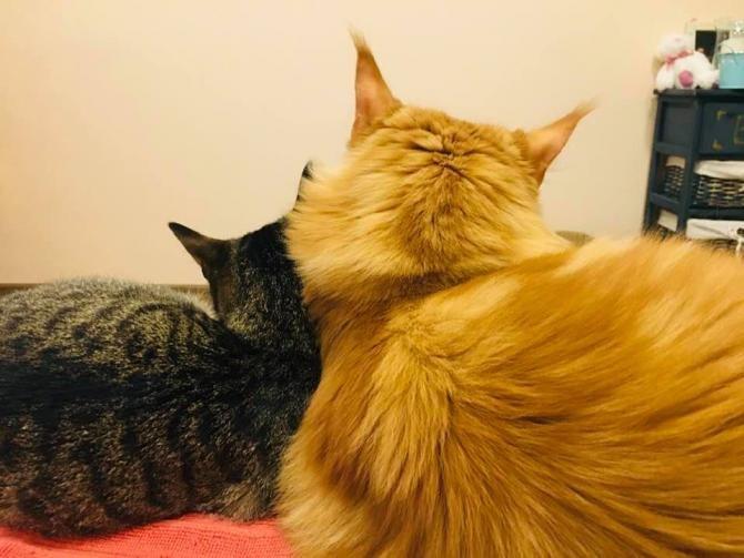 """Kendra Baker este o americană de 32 de ani care a conceput un sistem de comunicare cu pisica ei, Billi. Felina trebuie doar să apese câteva butoane cu cuvinte simple asociate, precum """"mâncare"""" sau """"supărat""""."""