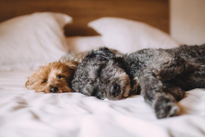 Problemele cardiace ale animalelor de companie ar putea avea legătură cu o variantă de COVID-19  /  Foto cu caracter ilustrativ: Pixabay