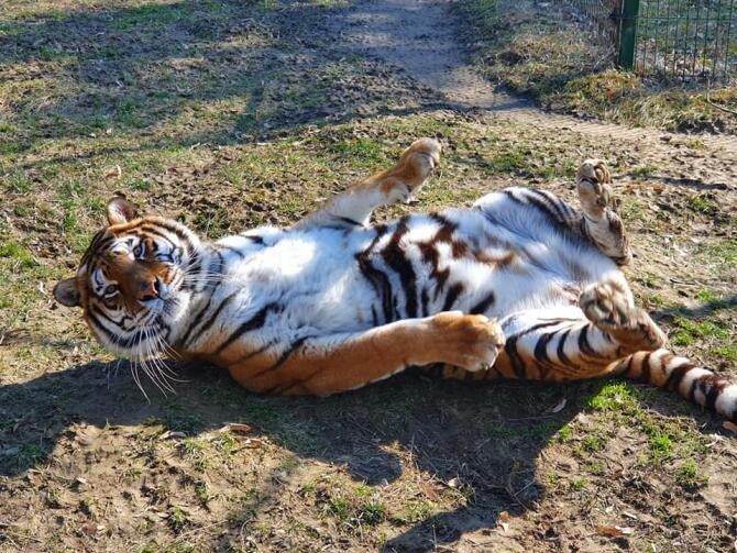 Foto: Facebook Zoo Ploiesti