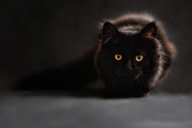 Imagini cu puternic impact emoțional. Un individ vânează pisici cu arcul  /  Foto cu caracter ilustrativ: Pixabay