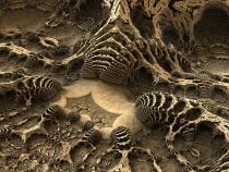 O fosilă de 1 miliard de ani ar putea fi cel mai vechi animal multicelular descoperit vreodată  /  Foto cu caracter ilustrativ: Pixabay