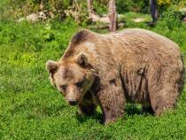 Român, terorizat de un urs. I-a distrus deja 20 de stupi, iar acum e atras de celelalte animale  /  Foto cu caracter ilustrativ: Pixabay
