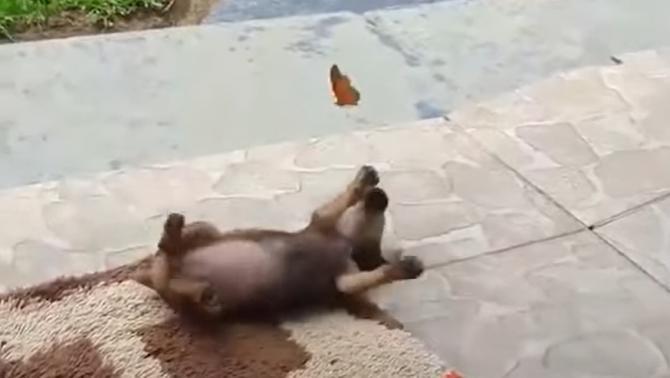 Fluturele și câinele, imaginile virale care au făcut înconjurul Internetului  /  Sursă foto: Captură Youtube