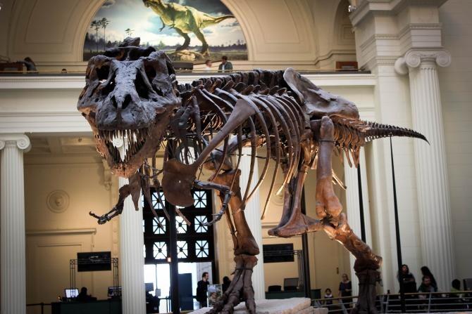 O nouă specie de dinozaur prădător a fost descoperită în Patagonia  /  Foto cu caracter ilustrativ: Pixabay