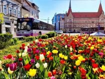 Autobuzele școlare revin pe traseu la Cluj-Napoca / Foto DC News