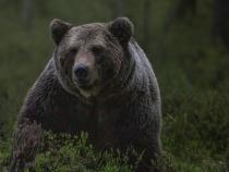 O ursoaică cu doi pui face prăpăd într-o comună din Dâmbovița. Localnicii sunt terorizați de animale  /  Foto cu caracter ilustrativ: Pixabay