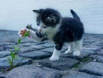 Descoperire științifică despre pisici. Felinelor le place să stea în cutii iluzorii / Foto cu caracter ilustrativ: Pixabay