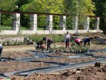 Pregătiri pentru Zilele Horticulturii Bucureștene  Foto: Crișan Andreescu